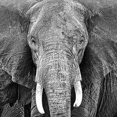 Elephant Fine Art Print by PhotoINC Studio at FulcrumGallery.com