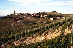 Barbaresco, Langhe, Piemonte, Italia.