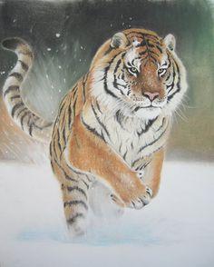 Siberian Tiger by AmaniWarrington  - pastel drawing #Art #Tiger #AnimalArt