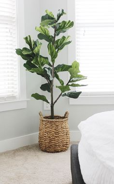 Faux fiddle leaf tree from qvc qvc fiddle leaf tree home home decor home ideas living room ideas design ideas design inspiration bedroom ideas faux plants faux tree affordable budget-friendly. Fake Plants Decor, House Plants Decor, Faux Plants, Garden Plants, Hanging Plants, Living Room Decor With Plants, Potted Plants, Cactus Plants, House Tree Plants