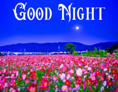 Good Night Images with flowers and nature - PIX Trends Sweet Good Night Images, Sweet Dreams Images, Photos Of Good Night, Good Night Sweet Dreams, Happy Good Night, Good Night To You, Good Night Gif, Good Night Blessings, Good Night Wishes