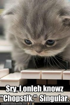 This kitten is soooo CUTE! Makes you wanna just hug and squeeze him!