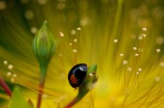 Bluesky at The Ladybug by yetihiro, via Flickr