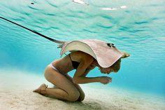 A little (sting)ray of sunshine on your shoulder? Stingray info: http://www.bioexpedition.com/stingray/ #Dynanim #Animals