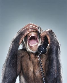 Monkey phone operator by Jill Greenberg