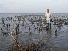 P.J. Hahn, Plaquemines Parish Coastal Zone Management Dir., surveys the remains of an island in Cat Bay (Photo by John Snell)