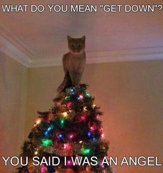 44 Trendy Ideas For Funny Christmas Tree Kitty Animal Humour, Funny Animal Quotes, Cat Quotes, Cute Funny Animals, Funny Animal Pictures, Funny Cute, Funny Pics, Christmas Cat Memes, Funny Christmas Tree