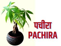 Lucky plants for home in hindi ये 15 लकी पौधे घर में लगायें House Plants Decor, Plant Decor, Indoor Plants Names, Oxygen Plant, Easy Rangoli Designs Diwali, Housewarming Decorations, Positive Energy Quotes, Lucky Plant, Money Plant