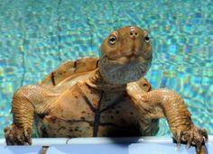 I loved my turtle George