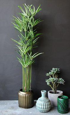Fake plants by Rockett St George, rockettstgeorge.co.uk...