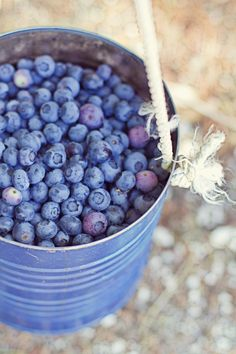 date idea in july | go blueberry picking