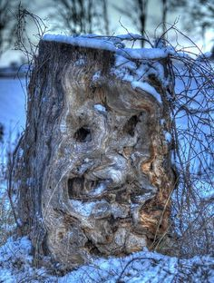 Face in the Tree  --  it's got me stumped!