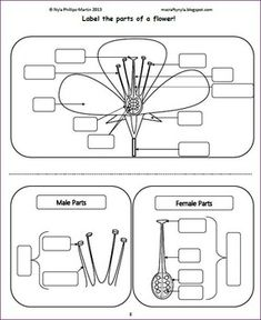 Parts of a Flower Craft Activity, Plant Activities