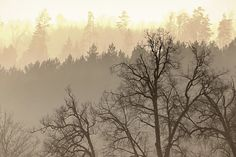 Photograph Foggy forest by **  REgiNA  **  on 500px