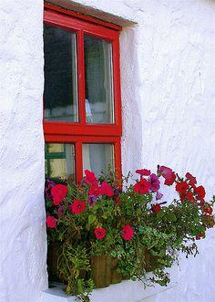 flower box I like the color window