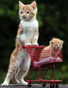 Kittens. Mommy can we get candy? I also wnat a lil sis. the mother kitten no no me and your father said we would  only have one kitten girl and one boy and the candy sure why not????????????????????????