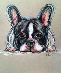 Pet Portrait Sketches - Johnny the French Bulldog Pencil, pen and colored pencil on gray toned paper www.juliepfirsch.com