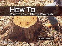 How To Remove A Tree Stump Painlessly--We recently shared a post on removing a stump by slowly burning it. Due to fire restrictions some people need a different solution… here it is. It's best to get the trunk of the stump s low as possible. Next drill 1 inch holes about 12 inches deep into the stump Around the out side …