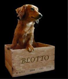 Otto in the Blotto box