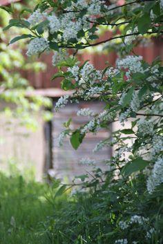 Vita drömmar & busiga barn: trädgård