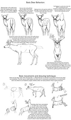 Basic Deer behavior tutorial by on DeviantArt Drawing Techniques, Drawing Tips, Drawing Reference, Drawing Sketches, Pose Reference, Animal Sketches, Animal Drawings, Drawing Animals, Deer Sketch