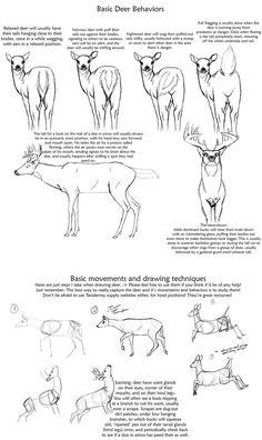 Basic Deer behavior tutorial by creepygoth666 on DeviantArt
