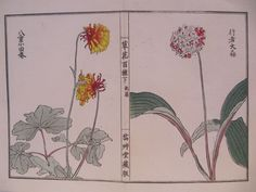 LATE 19th CENTURY, Japanese Woodblock Print in Colours, FLORAL STUDIES #19thCenturyJapanese