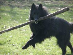 gots a stick <3