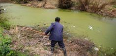 Águas de Pontal: 80% da água subterrânea da China está contaminada....