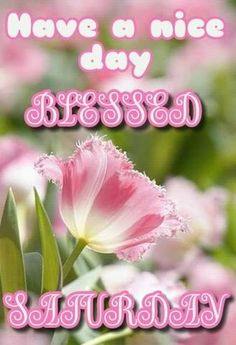 Have a blessed Saturday quotes flowers days of the week saturday saturday quotes