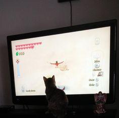 Tiny Zelda fan. #SkywardSword #cats