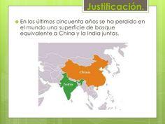 Justificación.<br />En los últimos cincuenta años se ha perdido en el mundo una superficie de bosque equivalente a China y...