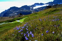 Marissa, see the flowers?? ''Devin! you've been my brother for 18 years.......'' This is even in Greenland.