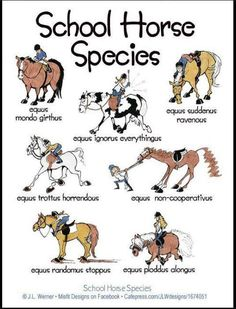 "Equine cartoons | Predictably Unpredictable"" - School Horse Species"