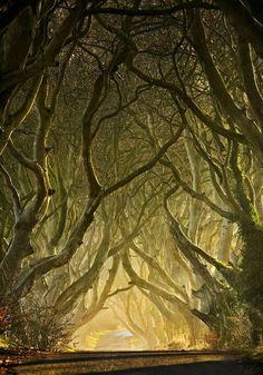 The dark hedges, Ireland ~The Kings Road~