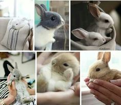 I am gonna grow up to be the crazy bunny lady...