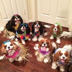 23 Reasons You Need To Follow These Cavalier Puppies On Instagram