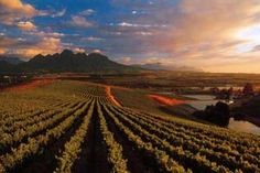 Sample some fine wines on a Cape Town Winelands Tour. South Africa Tours, Farms Living, Natural Scenery, Africa Travel, Cape Town, Things To Do, Around The Worlds, African, Outdoor