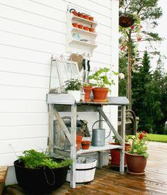Pelargonia og urtekrukke