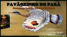 Amazônia - Aves Galináceas - Pavãozinho do Pará - Eurypyga helias - Celc...