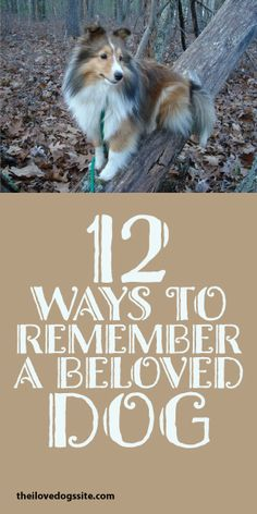 12 Ways To Remember A Beloved Dog <3
