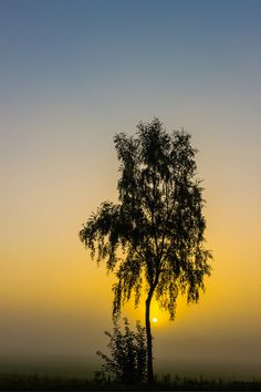 BennyKu89: Baum im Nebel bei Sonnenaufgang