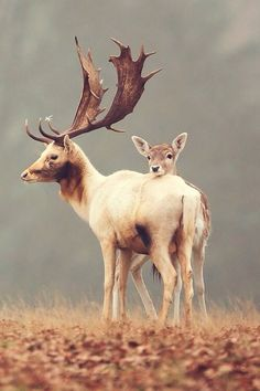 Nature Picture -- Fallow Deer Photo -- National Geographic Photo of the Day of the day awesome Nature Animals, Animals And Pets, Baby Animals, Cute Animals, Wild Animals, Animal Babies, Wildlife Nature, Beautiful Creatures, Animals Beautiful
