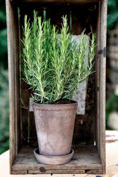 X ღɱɧღ Garden Planters, Herb Garden, Planter Pots, Potted Garden, Topiary Garden, Potted Trees, Topiaries, Tree Shop, Aromatic Herbs
