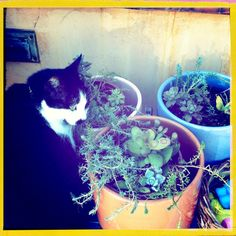 Happy Caturday from Bonnie who will be spending the day inspecting the plants.