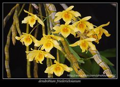 View Image, Orchids, Cool Photos, Plants, Plant, Planets, Orchid