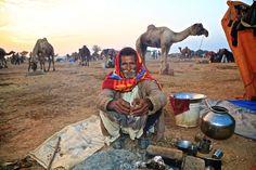 Nagaur Camel and Livestock Fair, Nagaur, Rajasthan