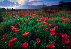 A field of poppies with cloudscape. Available prints at http://giovanni-allievi.artistwebsites.com/art/all/all/all/landscapes