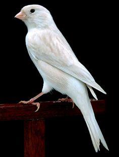 Birds 2, Small Birds, Little Birds, Colorful Birds, Pretty Birds, Beautiful Birds, Pet Future, Serin, Canary Birds