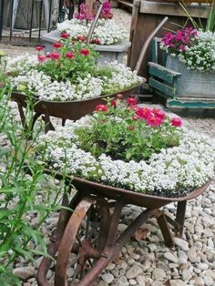 Rusty Vintage Wheelbarrow Flower Planters